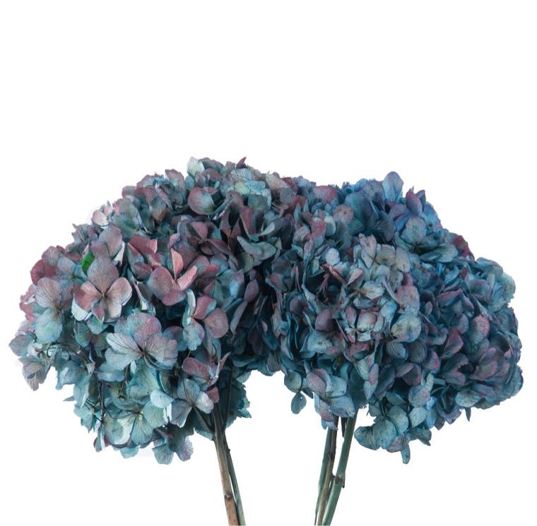 Qu'est ce que la fleur stabilisée ? - Verdissimo - Rodanthe